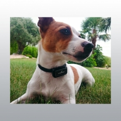 GPS PET DATA RECORDER