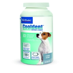 Cooldent Chien