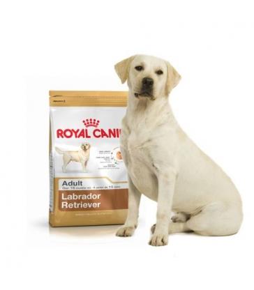 Royal Canin Labrador Retriever Adulte