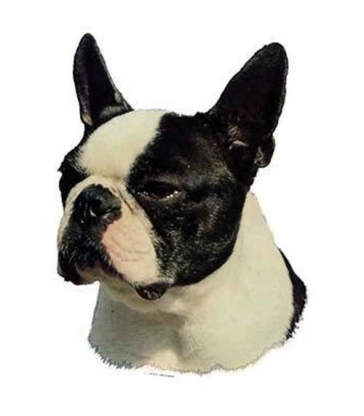 Autocollants Boston Terrier