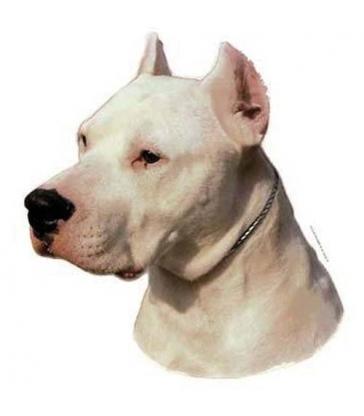 Autocollants Dogue Argentin
