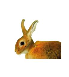 Carcan pour lapin UU .5 cm - Boîte de 10