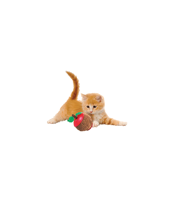 Kong Cat Scratcher Pomme