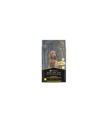 Dog Expert Care Puppy Agneau