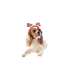 Accessoire Noël chien/chat : Serre-tête Cerf