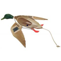 AILE de canard